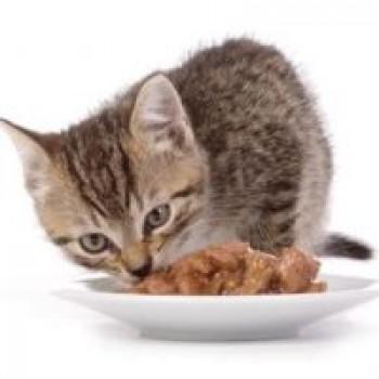 Υγρή Τροφή - Κονσέρβες Γάτας