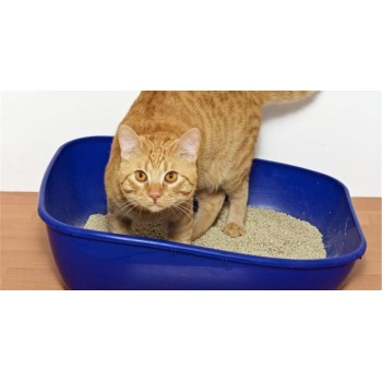 Άμμοι Γάτας