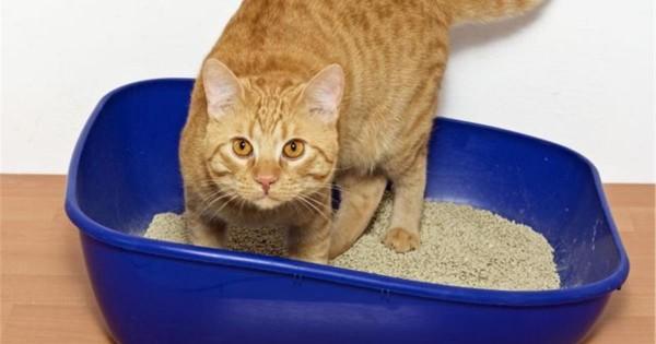 a29abb792535 Άμμοι γάτας