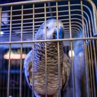 Pet Shop παπαγάλοι