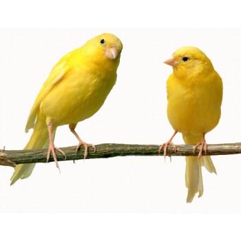 Διατροφή Πτηνά Ωδικά